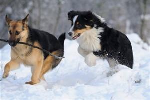 dog-in-snowy-woods