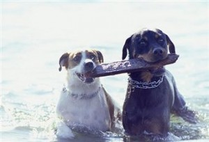 playing-dogs
