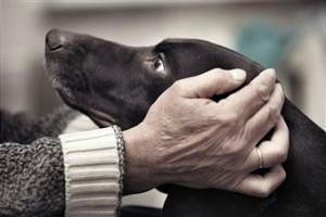 senior-with-dog